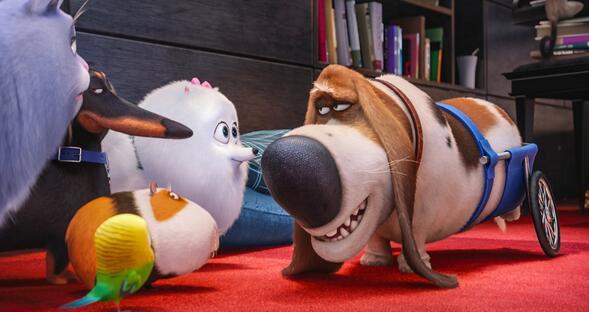 Copy The Secret Life of Pets Blu-ray/DVD Discs
